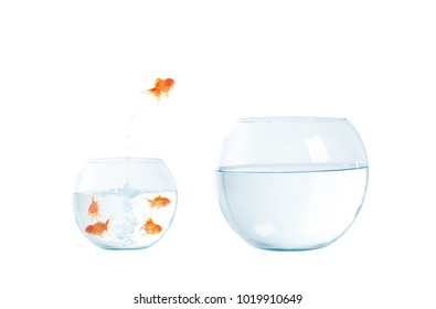 Gold fish jumping out of the fishbowl on the white background