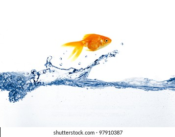 gold fish jumping over slash blue water