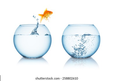 gold fish jumps in to a fishbowl with hot water
