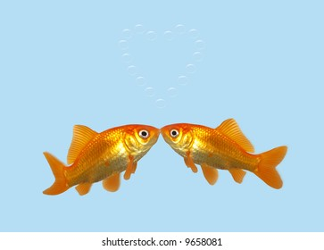 Gold fish kissing creating a heart of bubbles.