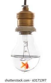 Gold fish in Light bulb