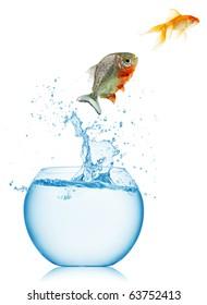 gold fish and piranha isolated