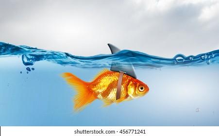 Gold fish with shark flip  . Mixed media