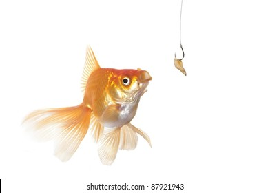 gold fish and worm  on a white background