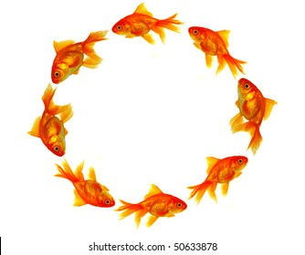 Gold fishes circle