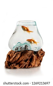 Gold fishes in the decorative fishbowl standing on the wooden stand isolation on the white background. Aquarium with fish for Iranian Nauryz
