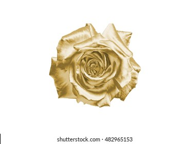 Gold flower on a white background .