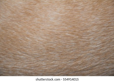 gold fur texture