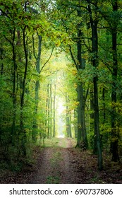 Gold and green forest in the fall in Europe