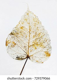 Gold leaves veins isolated on white background