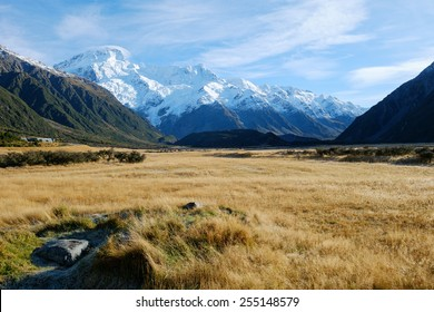 Gold Meadow with Mount Sefton Backdrop at Mount Cook Village, Aoraki, South Island, New Zealand