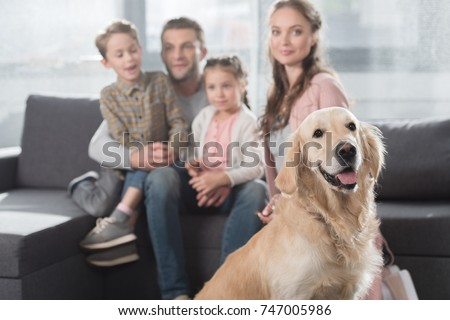 Gold Retriever Sitting On Floor Living Stock Photo Edit Now