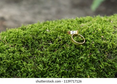 gold rings on the green moss closeup
