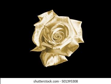 Gold rose on black background