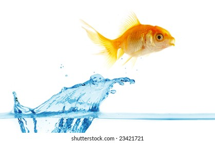 gold small fish jumps out of water...