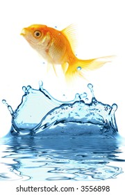 The gold small fish jumps out of water