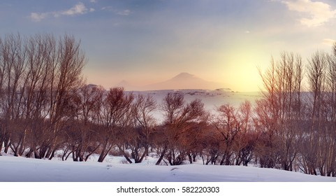 Gold sunset over forest in the Ararat mountains