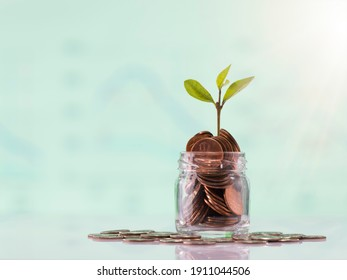 Gold United States coins and seed in clear bottle on white background, Business and Finance concept