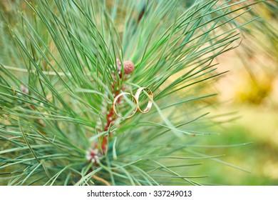 Gold wedding rings hang on a fir-tree branch