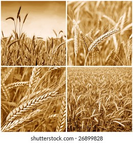 Gold wheat harvest collection background 01. Sepia version