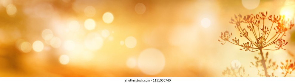 Golden abstract bokeh background with autumn flowers