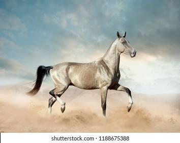 golden akhal-teke horse with blue eye running in desert