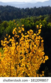 Golden aspen leaves in front of a mountainous landscape.
