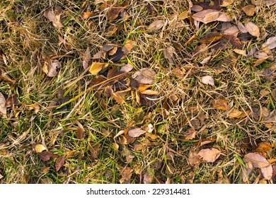 golden autumn background