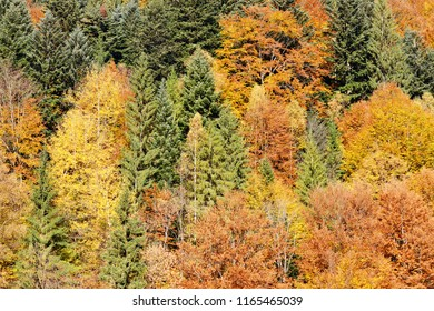 Golden autumn background. Yellow leaves on trees.