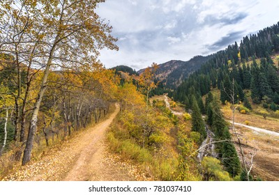 Golden Autumn colors in the mountains of Almaty. Tien Shan