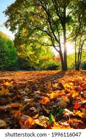 Golden autumn fall October in famous Munich relax place - Englischer Garten. English garden with fallen leaves and golden sunlight. Munchen, Bavaria, Germany - Shutterstock ID 1996116047
