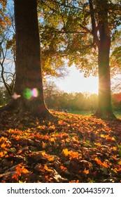 Golden autumn fall October in famous Munich relax place - Englischer Garten. English garden with fallen leaves and golden sunlight. Munchen, Bavaria, Germany - Shutterstock ID 2004435971