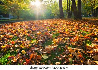 Golden autumn fall October in famous Munich relax place - Englischer Garten. English garden with fallen leaves and golden sunlight. Munchen, Bavaria, Germany - Shutterstock ID 2004435974
