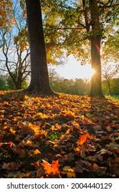 Golden autumn fall October in famous Munich relax place - Englischer Garten. English garden with fallen leaves and golden sunlight. Munchen, Bavaria, Germany - Shutterstock ID 2004440129