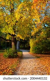 Golden autumn fall October in famous Munich relax place - Englischer Garten. English garden with fallen leaves and golden sunlight. Munchen, Bavaria, Germany - Shutterstock ID 2004440132
