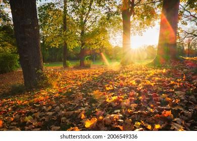 Golden autumn fall October in famous Munich relax place - Englischer Garten. English garden with fallen leaves and golden sunlight. Munchen, Bavaria, Germany - Shutterstock ID 2006549336
