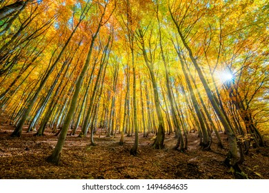 Golden Autumn forest background - autumnal landscape with bright yellow leaves and trees in wild forest