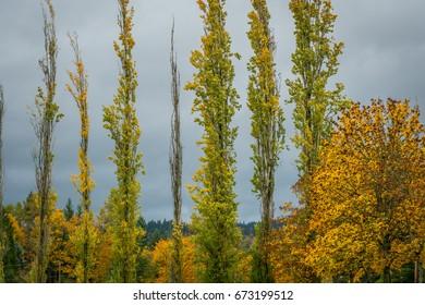 Golden autumn forest. Fall Foliage.