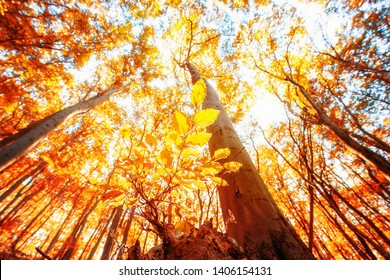 The Golden autumn in the forest of the Harz national Park