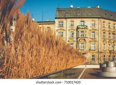 Golden Autumn in Krakow. Near the Wawel Castle