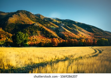 golden autumn landscape view in utah with mountains colorfull and yellow grass field car road