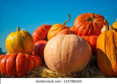 golden autumn, large different pumpkins, Different varieties of pumpkins, a wooden cart with pumpkins