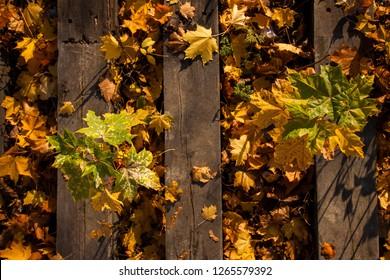 Golden autumn leaves on railway sleepers