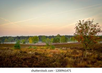 Golden autumn in the Luneburg Heath near Undeloh