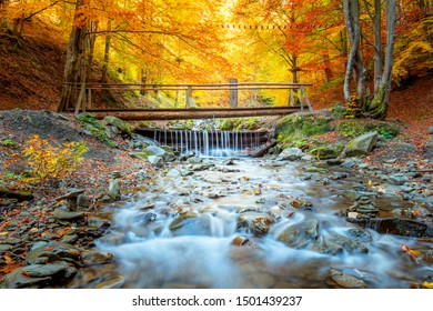 Golden Autumn in natural park - colorful forest trees, small wooden bridge and fast river with stones, fall landscape