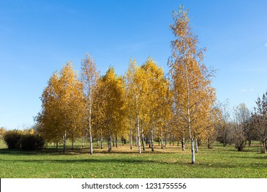 Golden autumn park