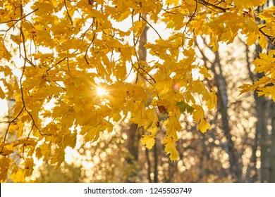 Golden autumn in park, avenue of trees,  sunny day, clear weather, reflections, leafs on the ground, shadows of trees, yellow color