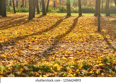 Golden autumn in park, avenue of trees, walking people with pet, couples sit on benches, sunny day, clear weather, reflections, leafs on the ground, shadows of trees, yellow color