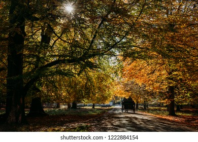 Maple Leaf Horse Images Stock Photos Vectors Shutterstock