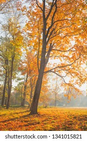 Golden autumn in the park. Nature in the vicinity of Pruzhany, Brest region, Belarus.
